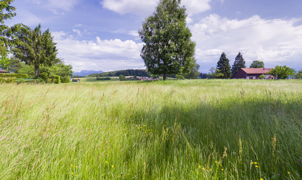 Land  for sale in Vaud Les Cullayes