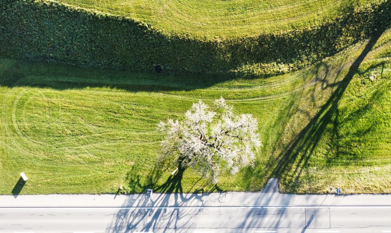 Kaufen Sie Grundstück in St. Gallen Mörschwil